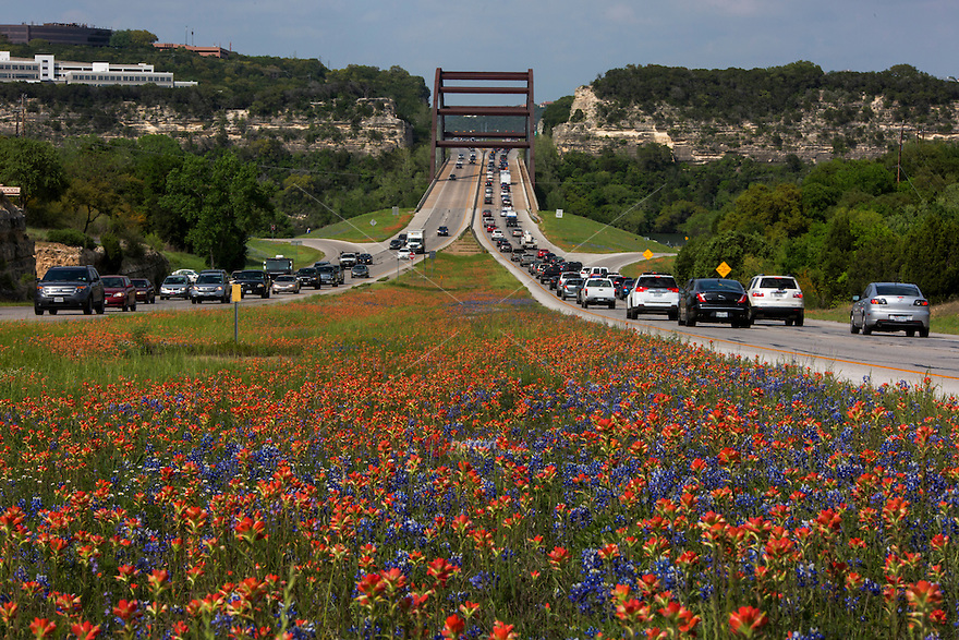 As far as the eyes can see, colorful Bluebonnets and vivid red Indian Paintbrush wildflowers bloom along the 360 Capitol of Texas Highway around the 360 Pennybacker Bridge. This makes for a peaceful drive during Austin drive-time traffic congestion - Stock Image.