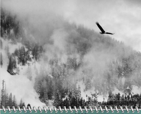 "January of the 2012 Birds of a Feather Calendar.  Photo is called ""Bald eagle in foggy flight""  and is Black and white of a bald eagle is in flight with wings spread over snow covered mountains and trees with fog rolling across the valley."