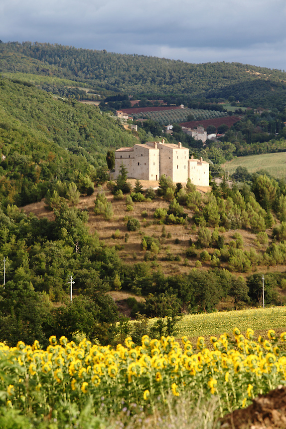 Near Todi, on the way back from Campello sul Clitunno: A beautiful view of the countryside, with a group of old building on the top of a hill, enlightened by the sun of the late afternoon, under a clouded sky, and sunflowerfs in foreground. Digitally Improved Photo.