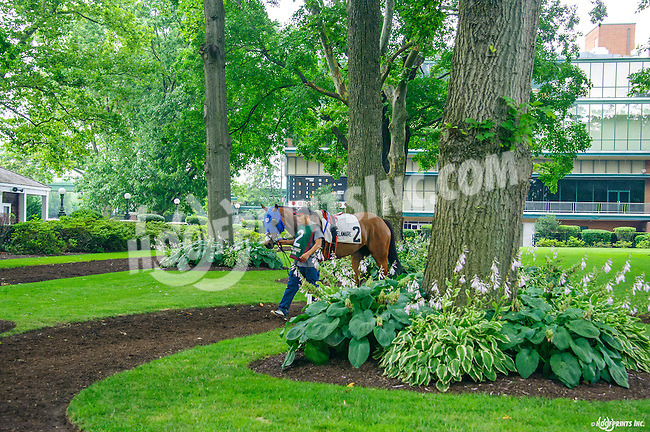 Sweet on Smokey before The Dashing Beauty Stakes at Delaware Park on 7/9/16