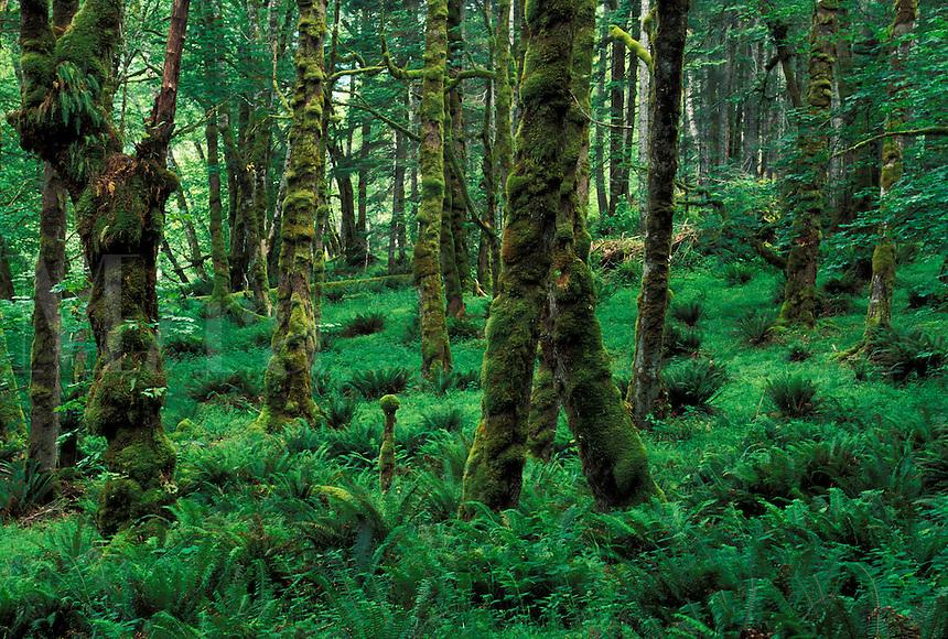 USA, Washington, Olympic National Park, rainforest