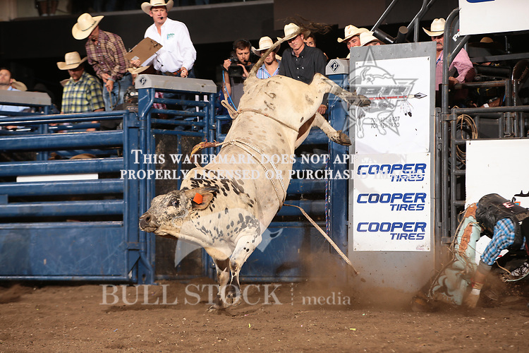 Cody Campbell attempts to ride Dakota Rodeo - Chad Berger/Nathan Hofer's Pops during the first round of the Bismarck Real Time Pain Relief Velocity tour PBR. Photo by Andy Watson