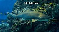 TP12-517z  Sand Tiger Shark, Carcharias taurus