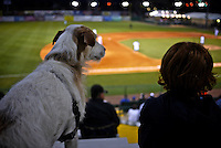 """A boy and his dog watch the action during a Daytona Cubs """"Take Your Dog to the Ballpark"""" day , Daytona Beach, FL, April 28, 2010.  (Photo by Brian Cleary/www.bcpix.com)"""