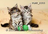 Marek, ANIMALS, REALISTISCHE TIERE, ANIMALES REALISTICOS, cats, photos+++++,PLMP2353,#a#