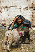 Sheep being sheared by Tibetans, Tibet, China