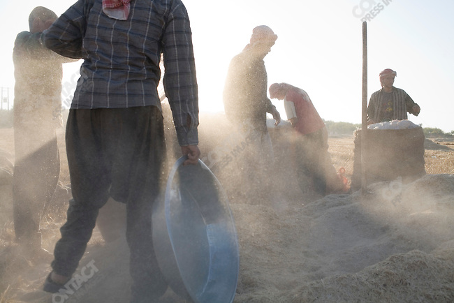 Cleaning the fields after the wheat harvest near Hama, Syria.