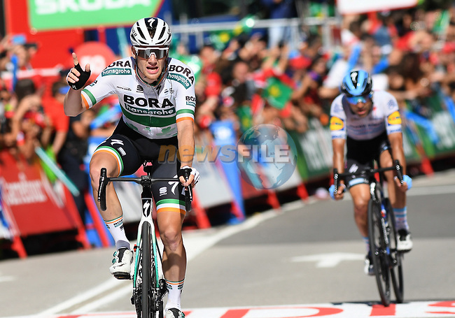 Sam Bennett (IRL) Bora-Hansgrohe wins Stage 14 of La Vuelta 2019  running 188km from San Vicente de la Barquera to Oviedo, Spain. 7th September 2019.<br /> Picture: Karlis   Cyclefile<br /> <br /> All photos usage must carry mandatory copyright credit (© Cyclefile   Karlis)
