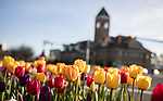 1704-06 GCS Spring 0085<br /> <br /> 1704-06 GCS Spring<br /> <br /> April 5, 2017<br /> <br /> Photography by Nate Edwards/BYU<br /> <br /> &copy; BYU PHOTO 2016<br /> All Rights Reserved<br /> photo@byu.edu  (801)422-7322