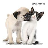 Xavier, ANIMALS, REALISTISCHE TIERE, ANIMALES REALISTICOS, FONDLESS, photos+++++,SPCHWS608,#A#