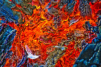 &quot;LONESOME DOVE&quot;<br />
