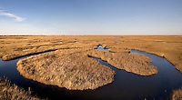 Salt Marsh; autumn; NJ, Ocean County