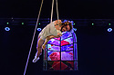 "Edinburgh, UK. 08.08.2018. Cirque Alfonse presents ""Tabarnak"", in the Lafayette, at Circus Hub, on The Meadows, as part of the Edinburgh Festival Fringe. Photograph © Jane Hobson."