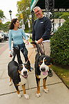 Merrick, New York, USA. 13th September 2014. L-R, KIM CONWAY and TOM CONWAY, of Merrick, and their two Greater Swiss Mountain dogs, Eden and her father Shea, visit the 23rd Annual Merrick Fall Festival & Street Fair, in suburban Long Island. Eden is 7 months old and about 70 pounts, and Shea is about 150 pounds.