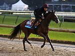 November 01, 2018 : Anthony Van Dyck in preparation for the Breeders' Cup on November 01, 2018 in Louisville, KY.  Candice Chavez/ESW/CSM