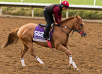 DEL MAR, CA - NOVEMBER 02: Skye Diamonds, owned by Tom Acker, Allen Racing LLC & Bloom Racing Stable LLC and trained by William Spawr, exercises in preparation for Breeders' Cup Filly & Mare Sprint at Del Mar Thoroughbred Club on November 2, 2017 in Del Mar, California. (Photo by Sue Kawczynski/Eclipse Sportswire/Breeders Cup)