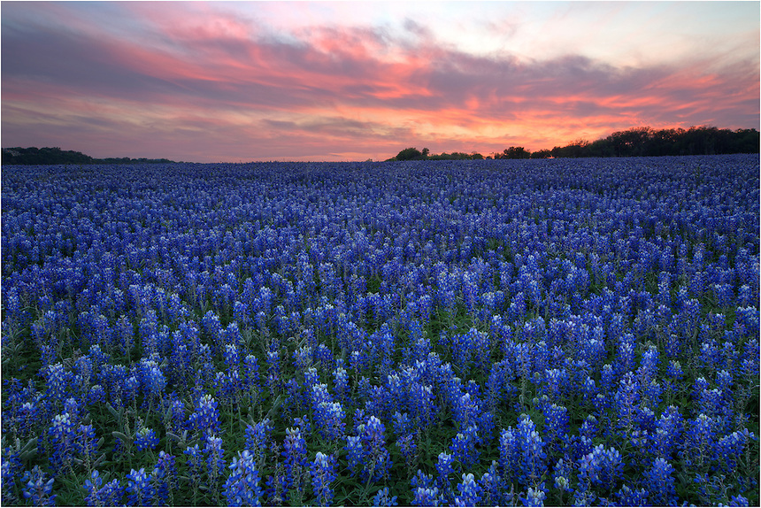 Sunset over the bluebonnets at Turkey Bend in the Spring of 2014 was a great sight. This bluebonnet field was one of the few that I found worthy of photographing. Located about 17 miles south of Marble Falls, this park is open to the public. While that is nice, it is often trampled and even driven through by folks who just don't respect that others might want to see this amazing scene after them.