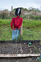 Scarecrow with red jumper looking over a newly planted vegetable garden to help protect against birds. Whitewell, Clitheroe, Lancashire, England....Copyright..John Eveson,.Dinkling Green Farm,.Whitewell,.Clitheroe,.Lancashire..BB7 3BN.Tel. 01995 61280.Mobile 07973 482705.j.r.eveson@btinternet.com.www.johneveson.com