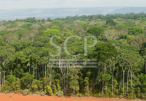 Para state, Brazil. Forest and red earth.
