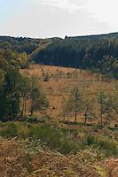 Plateau de Millevaches<br /> D164, près de l'étang des Oussines