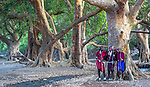 Maasai tribesmen meet under sycamore fig grove (Ficus sycomorus), Arusha, Tanzania  <br /> The massive spread of the sycamore fig makes for excellent shade in hot climates. It is both an ornamental tree and orchard tree because of its delicious fruit. Not only is the tree mentioned in the Bible, but it is of great religious importance to the Kikuyu.<br /> <br /> Canon EOS-1D X Mark II, EF100-400mm f/4.5-5.6L IS II USM lens, f/5 for 1/50 second, ISO 2000
