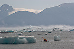 Alaska, Prince William Sound, Lone sea kayaker, bad weather, Columbia Bay, Columbia Glacier, icebergs,