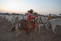 in the Pantanal, the world's largest and wildest wetland, in Brazil, Pantanero (cowboys) open the ranch in sunrise to drive the cattle to daily fresh forage in the incredible landscape that is sharing with wildlife, including the beautiful and mysterious jaguar. Jaguars have typically been hunted by people who are trying to protect their cows