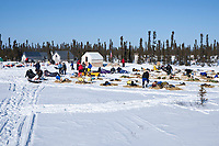 Dogs rest in the sunshine at the remote Cripple checkpoint 1/2 way into the race during the 2010 Iditarod