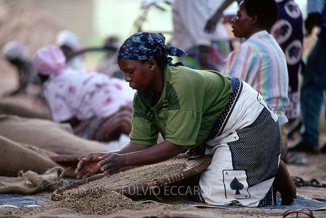 Uganda, Jinja, factory, coffee, coffea, organic, beans, arabica, process, dry, worker, woman, women, group