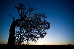 A tree silhouette in Arizona