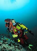 ma33. Pacific Giant Octopus (Enteroctopus dofleini) interacts with female scuba diver (model released). Pacific Northwest, Pacific Ocean..Photo Copyright © Brandon Cole. All rights reserved worldwide.  www.brandoncole.com..This photo is NOT free. It is NOT in the public domain. This photo is a Copyrighted Work, registered with the US Copyright Office. .Rights to reproduction of photograph granted only upon payment in full of agreed upon licensing fee. Any use of this photo prior to such payment is an infringement of copyright and punishable by fines up to  $150,000 USD...Brandon Cole.MARINE PHOTOGRAPHY.http://www.brandoncole.com.email: brandoncole@msn.com.4917 N. Boeing Rd..Spokane Valley, WA  99206  USA.tel: 509-535-3489