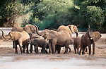 African elephant herd near a watering hole, Samburu National Reserve, Kenya