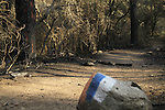 Israel, Mount Carmel, Isrel Trail after the big fire