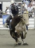 "29 August, 2004: PRCA Rodeo Bull Rider Matt Austin ranked 7th in the world riding ""Out of Here"" during the PRCA 2004 Extreme Bulls competition in Bremerton, WA."