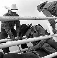 A bronc rider awaits is ride at the Earl Anderson Memorial Rodeo in Grover, Colo.