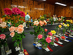 Floriculture display, Friday at the 80th Amador County Fair, Plymouth, Calif.<br /> .<br /> .<br /> .<br /> .<br /> #AmadorCountyFair, #1SmallCountyFair, #PlymouthCalifornia, #TourAmador, #VisitAmador