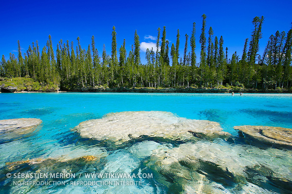 Natural swimming pool oro bay isle of pines new for Piscine naturelle ile des pins