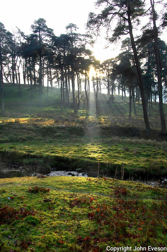 Sun shining through trees near Marshaw, Trough of Bowland, Lancashire....Copyright John Eveson 01995 61280.j.r.eveson@btinternet.com