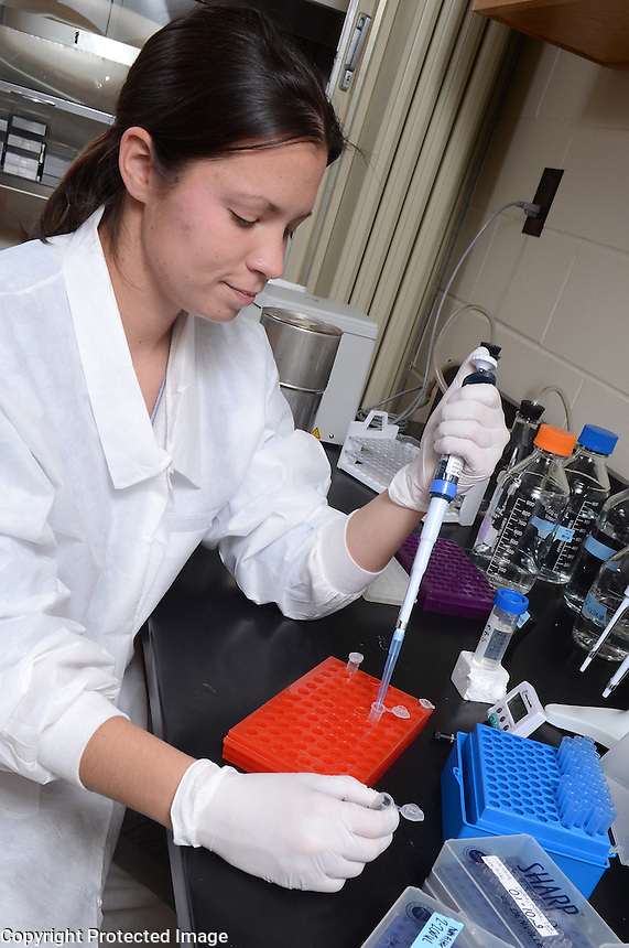 Student, Caitlin Riggs, working on cyclosporine bioassays for Dr. Todd Archer and Dr. Andrew Mackin.  Caitlin is is enrolled in the DVM/PhD program which requires two years of research, four years of veterinary medical school and one year to complete the PhD.
