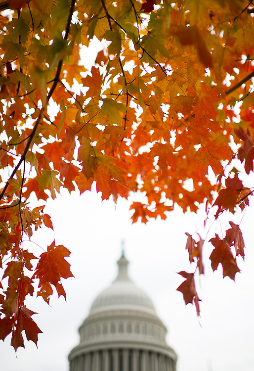UNITED STATES - NOVEMBER 5: Peak fall colors surround the Capitol dome on Tuesday, Nov. 5, 2013. (Photo By Bill Clark/CQ Roll Call)