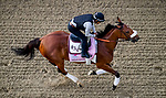 LOUISVILLE, KENTUCKY - MAY 02: Bellafina, trained by Simon Callaghan, exercises in preparation for the Kentucky Oaks at Churchill Downs in Louisville, Kentucky on May 2, 2019. Scott Serio/Eclipse Sportswire/CSM