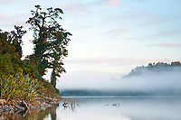 Misty morning at Lake Wahapo - Westland National Park, West Coast, New Zealand
