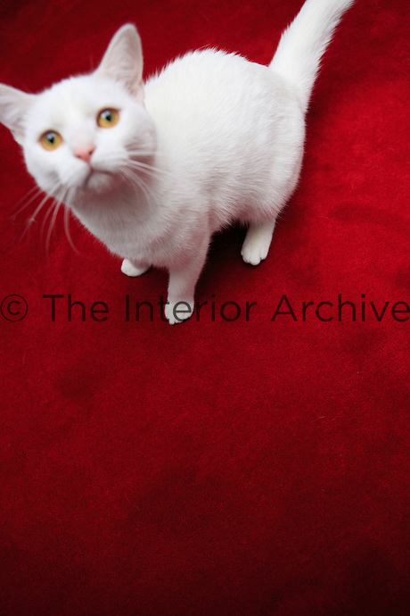 Even the cat coordinates with the colour scheme of an elegant loft in Paris