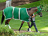 Lady Olivia in the paddock at Delaware Park on 8/17/13