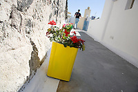 Flowers along the walkway through Santorini, Greece on July 4, 2013.