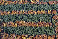 Herbstwald:DEUTSCHLAND, SCHLESWIG- HOLSTEIN 30.10.2005:Sachsenwald,  Laubbaeume, Nadelbäume Herbst, Laubfaerbung