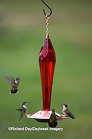 01162-12705 Ruby-throated Hummingbirds (Archilochus colubris) at feeder near flower garden,  Marion Co.  IL