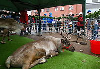 Aston Villa fans take pictures of a reindeer, outside Villa Park<br /> <br /> Photographer Alex Dodd/CameraSport<br /> <br /> The EFL Sky Bet Championship - Aston Villa v Leeds United - Sunday 23rd December 2018 - Villa Park - Birmingham<br /> <br /> World Copyright &copy; 2018 CameraSport. All rights reserved. 43 Linden Ave. Countesthorpe. Leicester. England. LE8 5PG - Tel: +44 (0) 116 277 4147 - admin@camerasport.com - www.camerasport.com