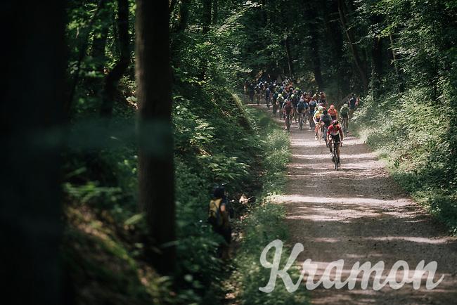 when a road peloton hits the forest gravel...<br /> <br /> 3rd Dwars Door Het hageland 2018 (BEL)<br /> 1 day race:  Aarschot > Diest: 198km