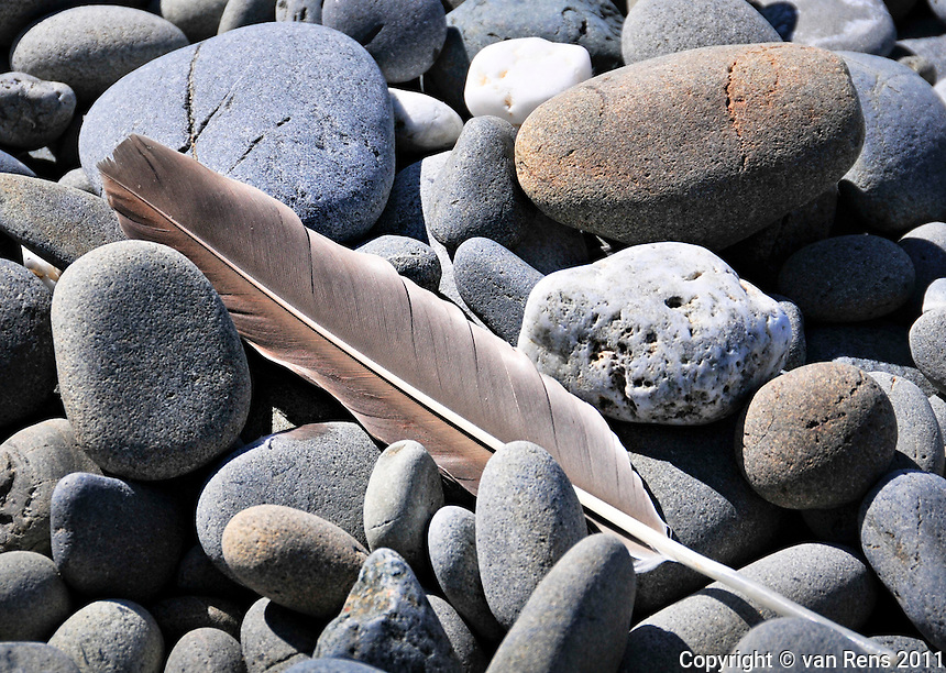 Feather in stones on Taholah Indian Reservation.